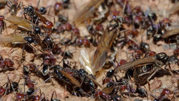 Муравьи во сне. К чему снятся муравьи