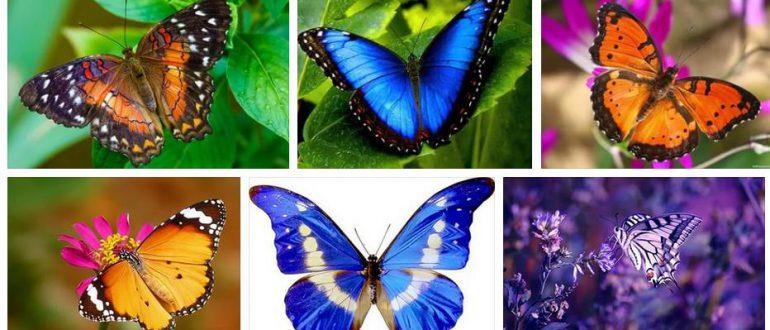 Бабочка - во сне