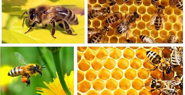 К чему снятся пчелы - сон толкование