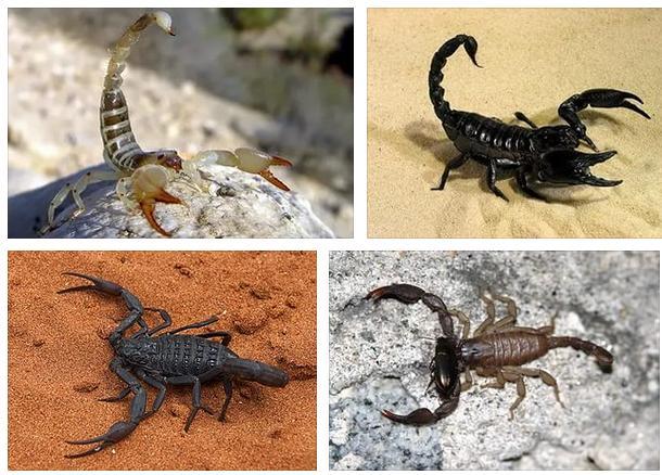 Скорпионы - сонник, полное значение