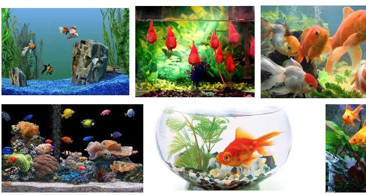 К чему снится рыба в аквариуме