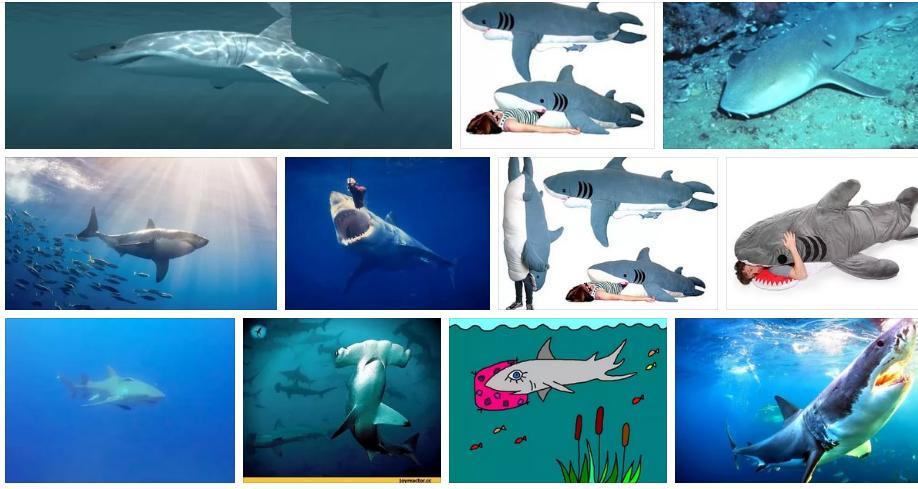 Приснилась акула - толкование сна по сонникам