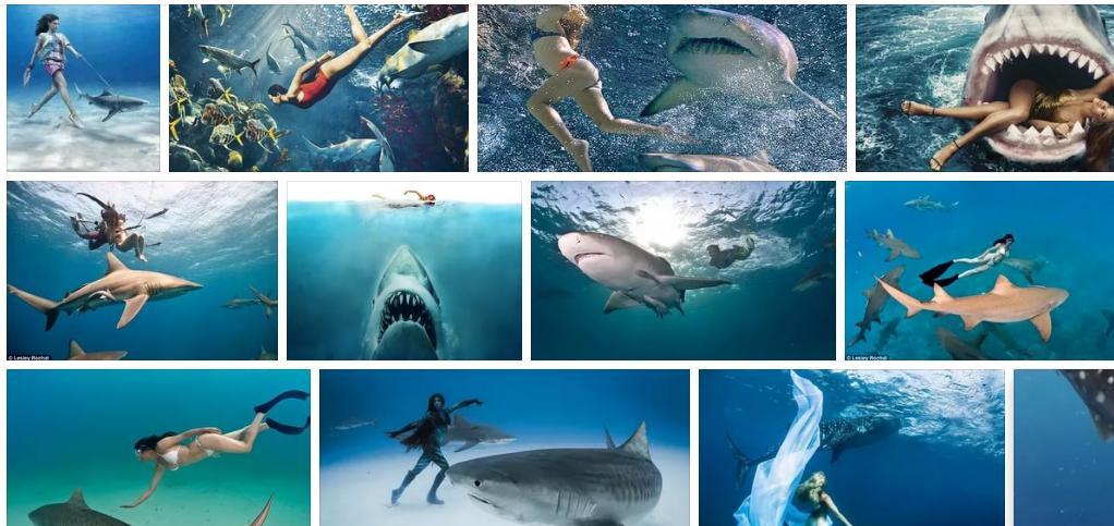 Приснилась акула женщине - толкование сна по сонникам