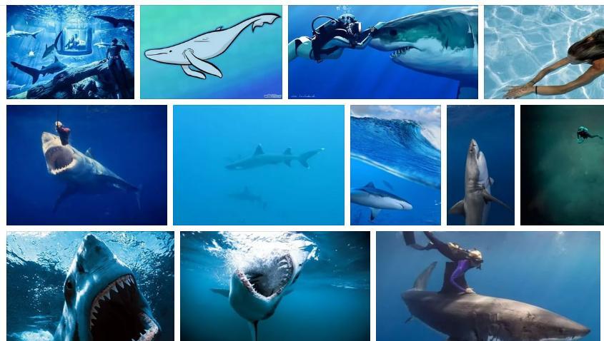Приснилась акула в воде - толкование сна по сонникам
