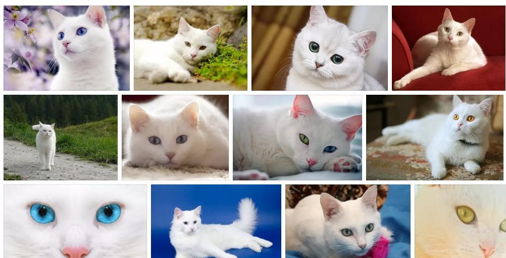 Приснилась белая кошка- толкование сна по сонникам