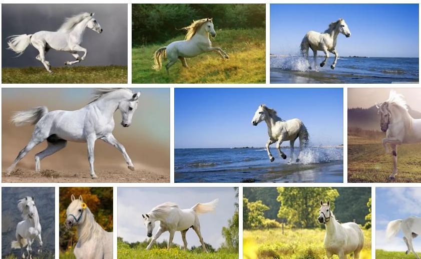 Приснилась белая лошадь - толкование сна по сонникам