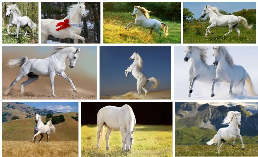 Снится лошадь белая - толкование снов по сонникам