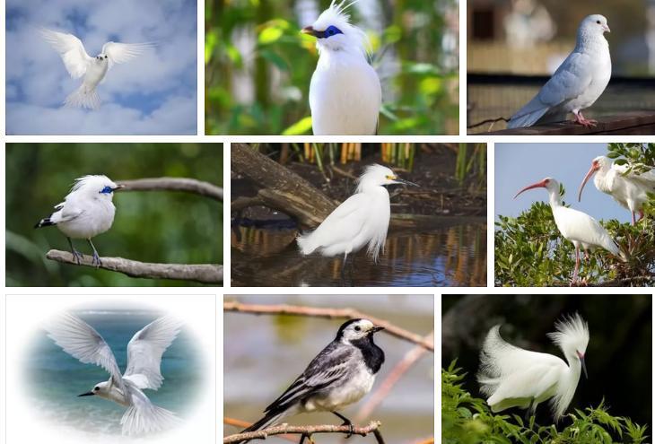 Приснилась белая птица - толкование сна по сонникам