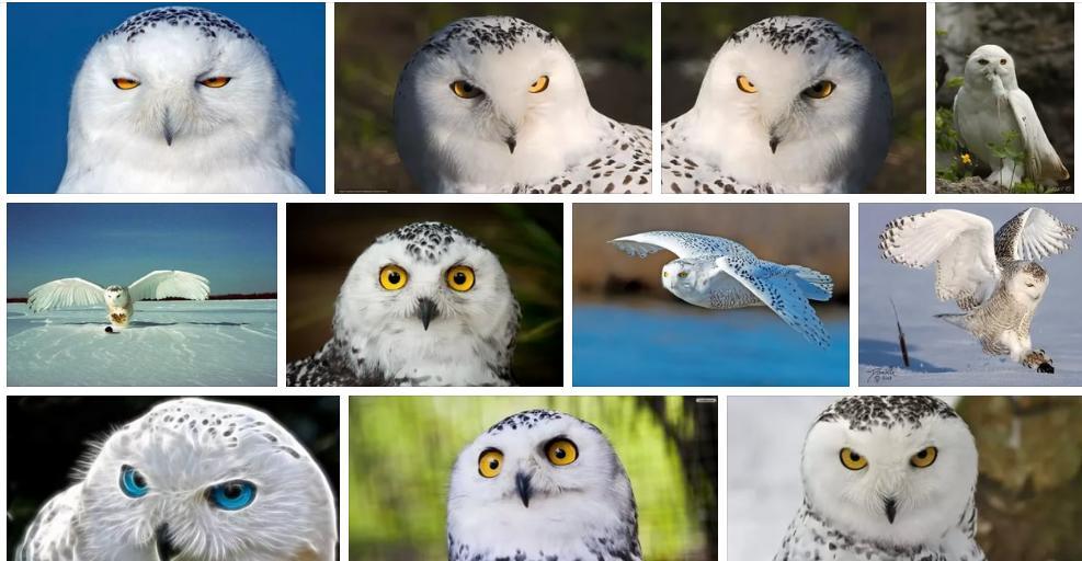 Приснилась белая сова - толкование сна по сонникам