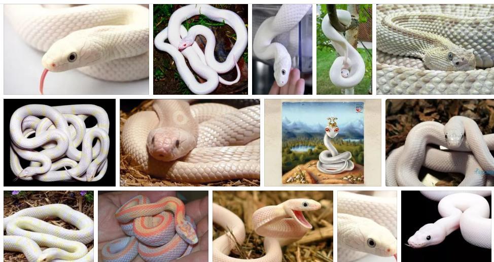 Приснилась белая змея - толкование сна по сонникам