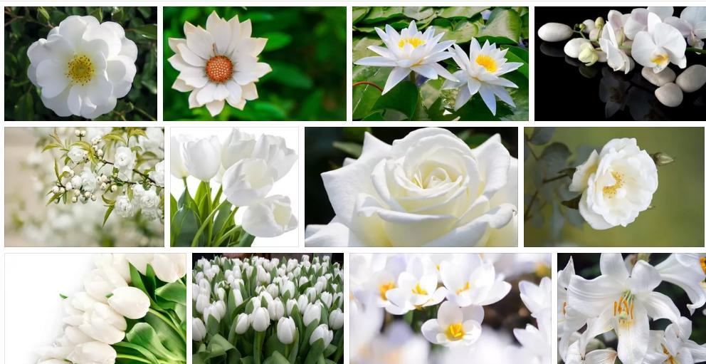 Приснились белые цветы - толкование сна по сонникам