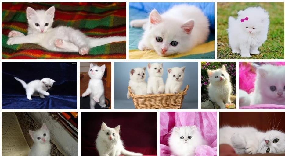 Приснился белый котенок - толкование сна по сонникам