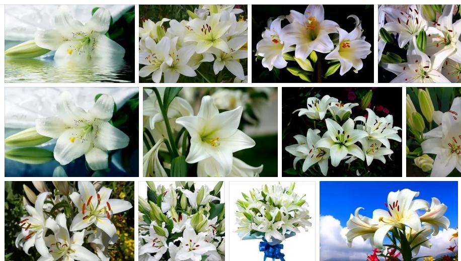 Приснились белые лилии - толкование сна по сонникам