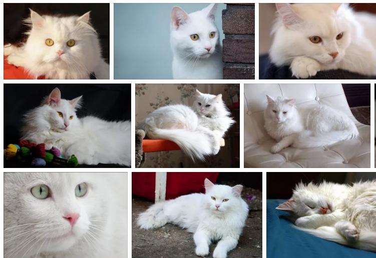 Приснился белый кот - толкование сна по сонникам