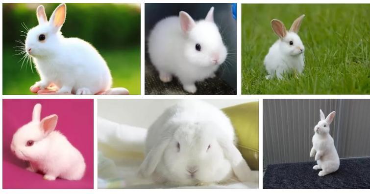 Приснился белый кролик - толкование сна по сонникам