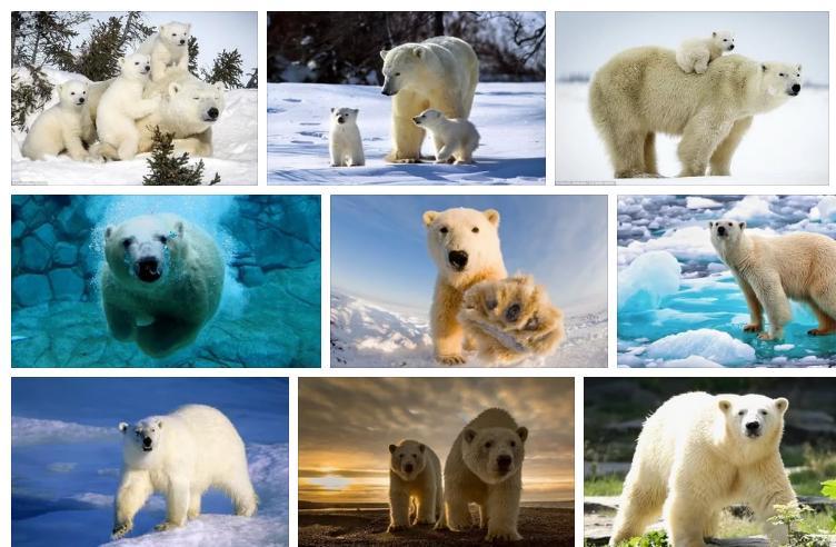 Приснился белый медведь - толкование сна по сонникам