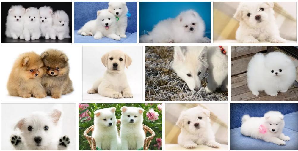 Приснился белый щенок - толкование сна по сонникам