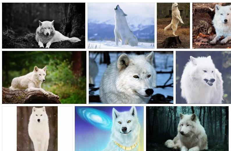 Приснился белый волк - толкование сна по соннику