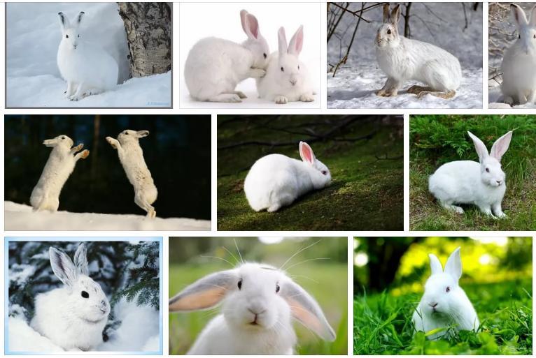Приснился белый заяц - толкование снов по соннику