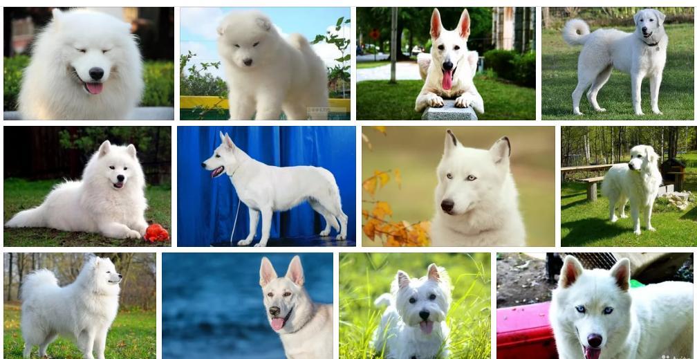 Приснилась белая собака - толкование сна по сонникам