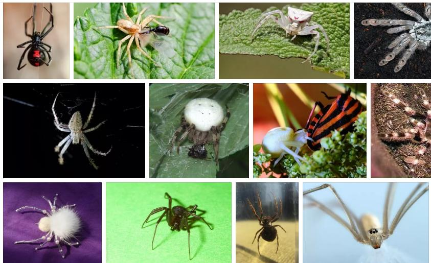 Приснился белый паук - толкование сна по сонникам