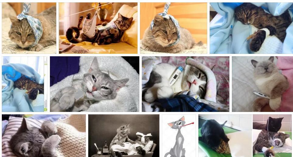 Приснилась больная кошка - толкование сна по сонникам