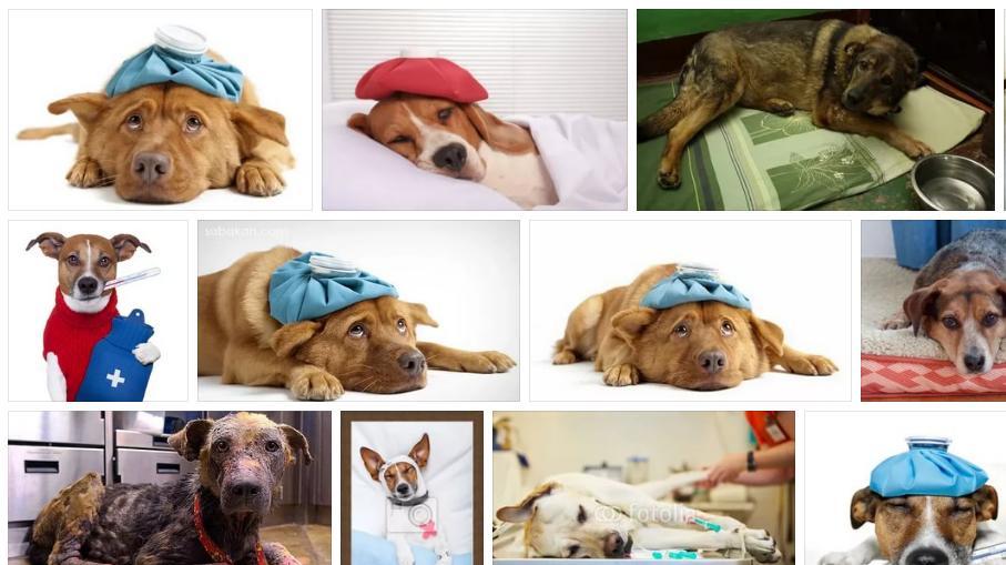 Приснилась больная собака - толкование сна по сонникам