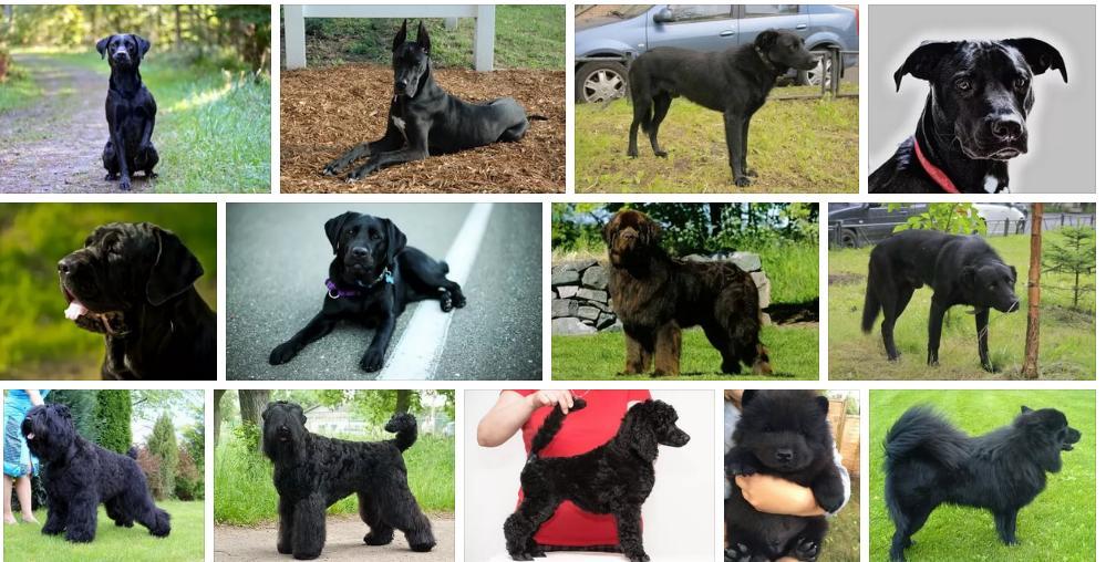 Приснилась большая черная собака — толкование снов по сонникам
