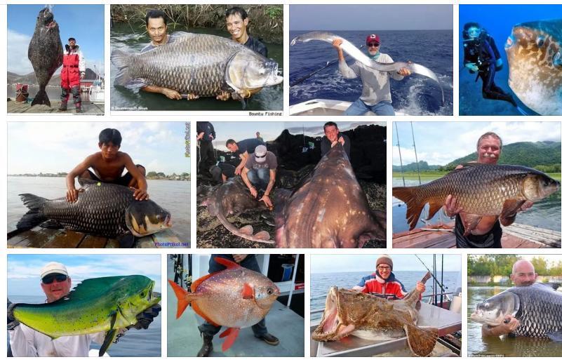 Приснилась большая рыба - толкование сна по сонникам