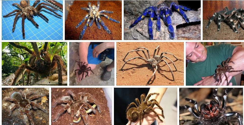 Приснились пауки большие - толкование сна по сонникам