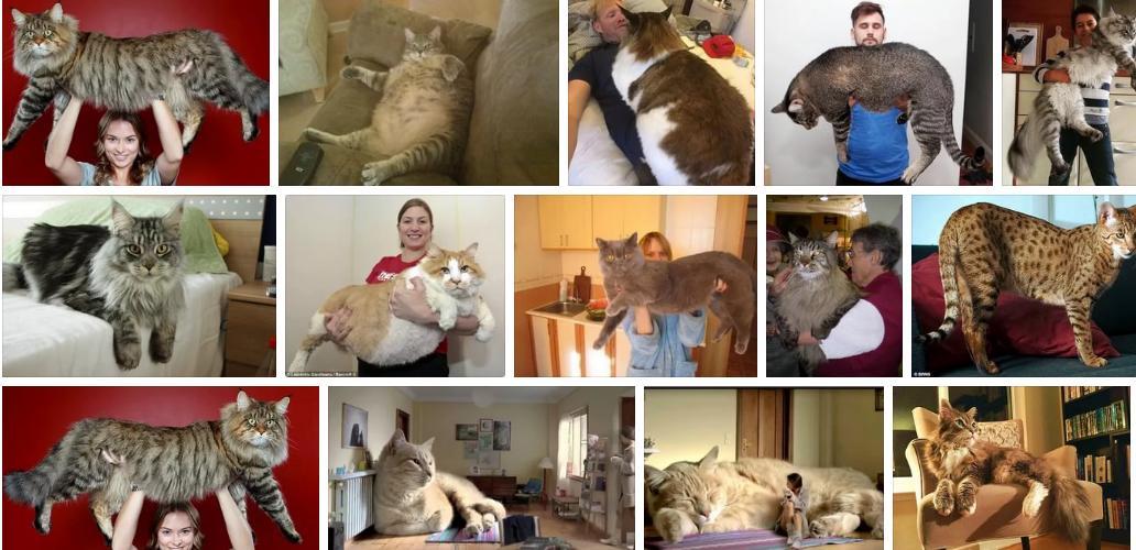 Приснился большой кот - толкование сна по сонникам