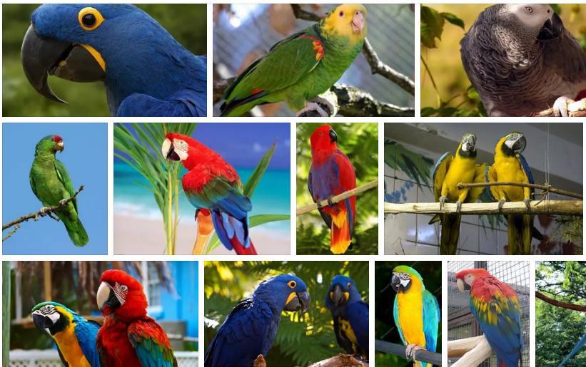 Приснился большой попугай - толкование сна по сонникам