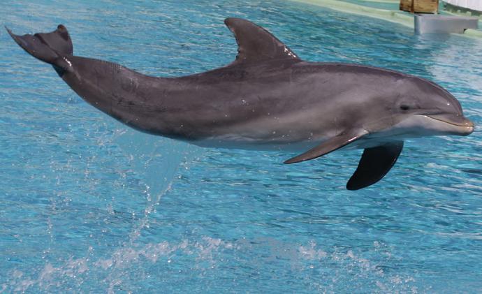 Приснились дельфины - толкование сна по сонникам