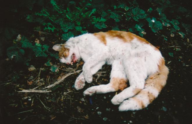 Приснилась дохлая кошка - толкование сна по сонникам