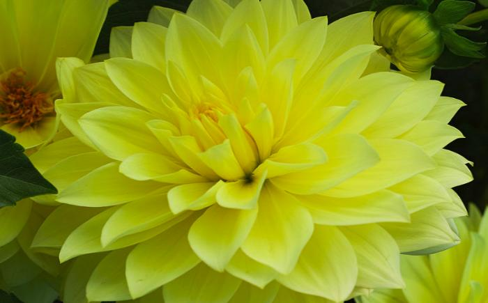 Желтые цветы – толкование сна по сонникам