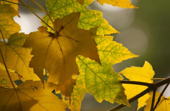 Желтые листья - толкование сна по сонникам