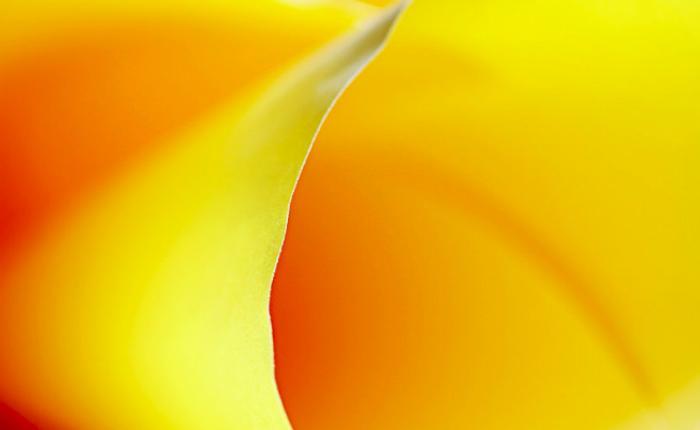 Желтый цвет – толкование сна по сонникам