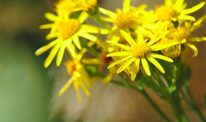 Живые цветы – толкование сна по сонникам